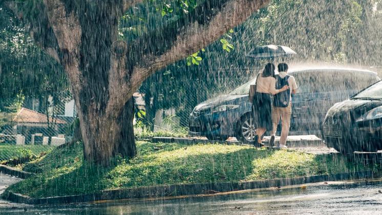 wet season.png